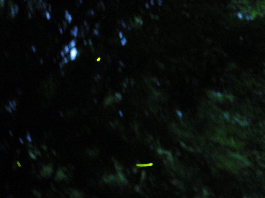 RIMG3548