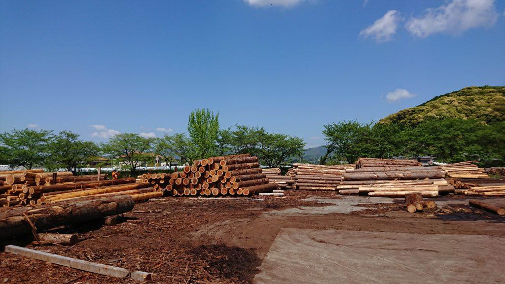 土場 山で伐採された丸太は一旦ここに集められます。