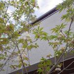 杉小巾天井の家